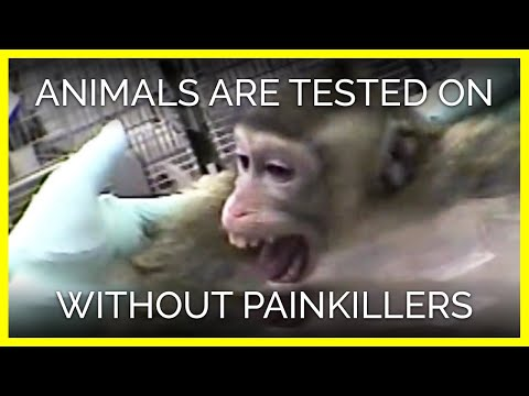 Animals Are Routinely Tested On Without Painkillers