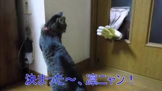 手袋で防御してまで、ニャンコと遊びたいアラフィー男(-_-)