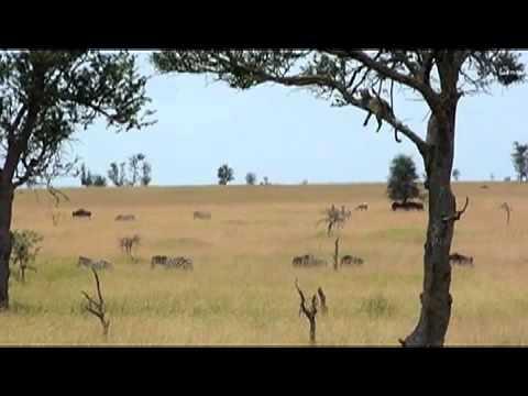Serengeti and the Ngorongoro Crater.mp4