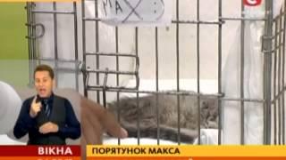 Весь Киев спасает жизнь 4-месячного котенка - Вікна-Новини - 04.09.2013