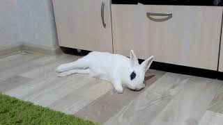 Как кролики отдыхают? funny bunny