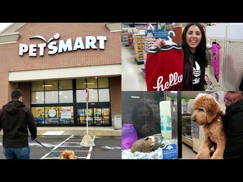 SHOP WITH ME AT PETSMART! WITH MY GOLDENDOODLE PUPPY!