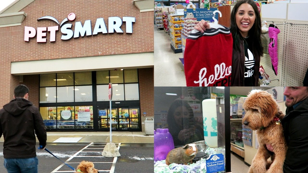 petsmart vs petco | best🔥 | ☀☀☀ dog training petsmart vs petco ☀☀☀ why do not click to read about dog training petsmart vs petco,secrets you never knew get started now.