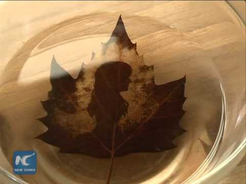 Chinese artist etches amazing images on leaves
