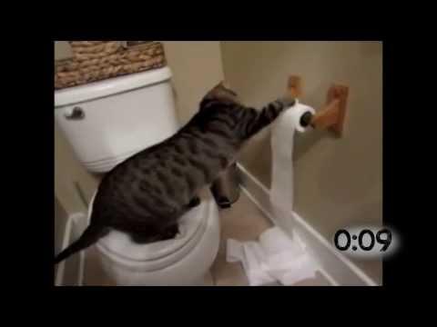 Cats Battling Toilet Paper Rolls