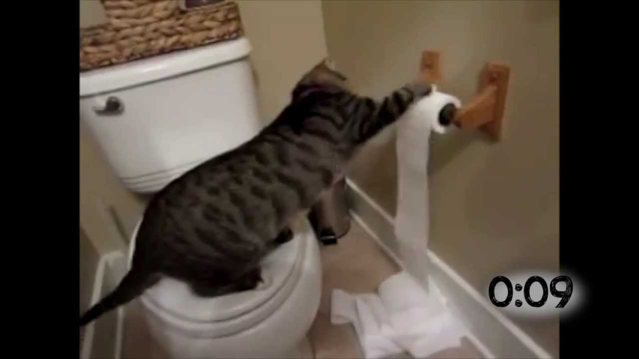 cats battling toilet paper rolls