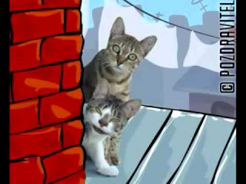 текст к 8 марта. Трек Коты - Кошачья песня к 8 марта в mp3 192kbps