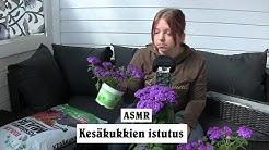ASMR - Kesäkukat