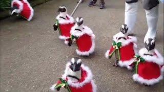 Incluso los Pingüinos se preparan para esta Navidad.