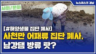 사천만 어패류 집단 폐사, 남강댐 방류 탓? [MBC경…