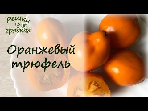 Сорта томатов | Японский трюфель оранжевый