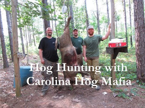 Hog Hunting With Carolina Hog Mafia