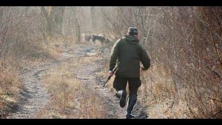 Охота на кабана с лайками 2019