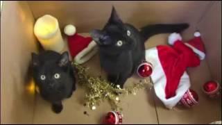 Tierschutzbund Basel Regional: Weihnachtsgrüsse aus dem Katzenheim Muttenz