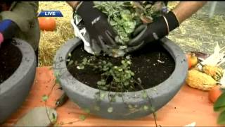 BT Vancouver: Fall Gardening Tips With Wim Vander Zalm