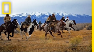 Chase a Wild Buffalo Stampede With These Heroic Cowboys   Short Film Showcase