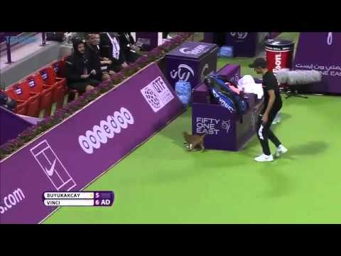 Cat On The Loose | Qatar Total Open Tennis Court
