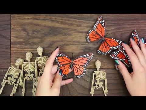 DIY Butterfly Skull Display