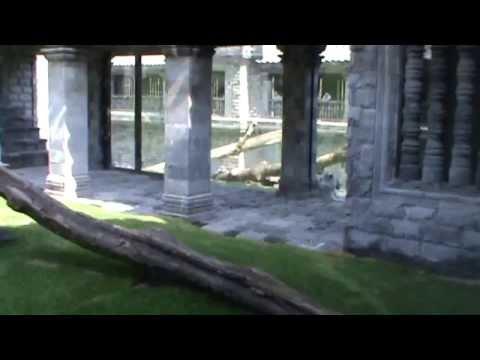 Pairi Daiza, Cambodjaanse tempel (witte tijgers, Afrikaanse luipaarden & nevelpanters)