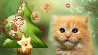 Поздравление с Новым годом от рыжего котенка. Видео открытка