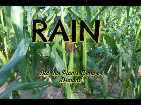 RAIN  --Did Our Plants Grow or Drown?