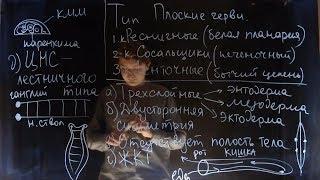 Плоские черви. Ресничные, сосальщики и ленточные | Andrey Biology