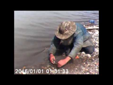 Yellowstone river / first Burbot of the year