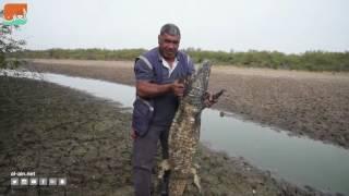 بالفيديو.. جفاف المياه يحول تماسيح باراجواي إلى هياكل