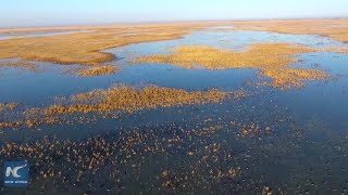 Inner Mongolia nature reserve sees over 100,000 migratory birds