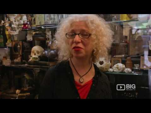 Obscura Antiques and Oddities Antique Store New York for Quirky Furniture and Taxidermy