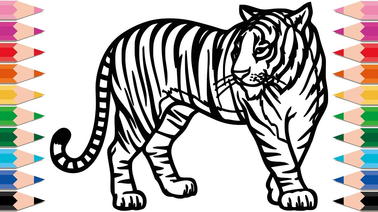 How to Draw Tiger Coloring Pages for Kids Drawing and ...