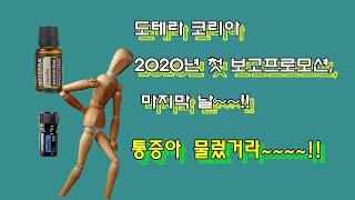 도테라코리아 2020년 첫 보고프로모션 마지막 날 !!…