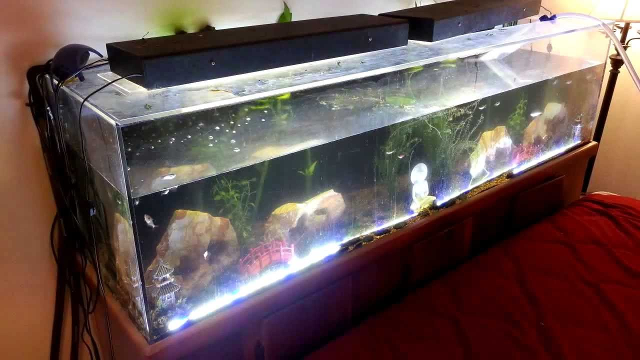 Freshwater aquarium fish water change - Bacteria Bloom Reacts To Water Change
