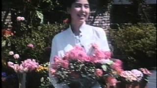 くつろぎ色のビスケットブルボン 1978 チョコ&コーヒー ビザール 浜美...