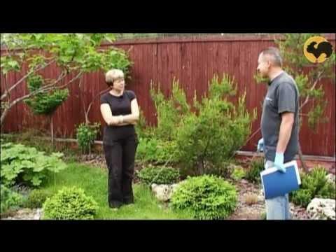 Сосны в саду-1 Ландшафтные хитрости 68