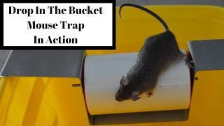 Drop In The Bucket Mouse Trap In Action With Motion Cameras. Mousetrap Monday