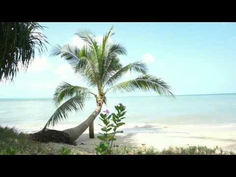 Relaxing Video - Tropical Beach with Palm Tree (Koh Samui, Thailand)