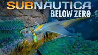 Subnautica Below Zero 04 | Bleifrei aber nicht haifrei | Gameplay thumbnail
