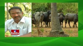 Natural Farming By Farmer Satish Babu | Coconut Cultivation | Nela Talli Weekend | HMTV