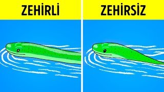 Bir Yılanla Karşılaşırsanız Ne Yapmalısınız