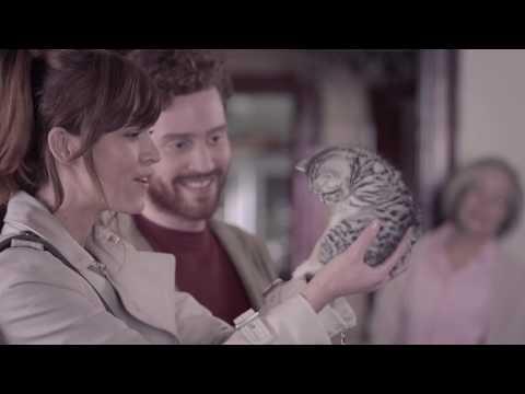 whiskas-feed-their-curiosity