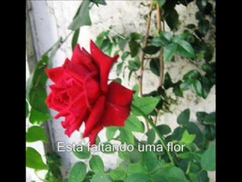 Minha Mãe, Minha Flor - Anjos de Resgate