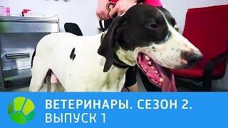 Ветеринары. Удав, конь, ёж, ездовая собака. 2 сезон | Живая Планета