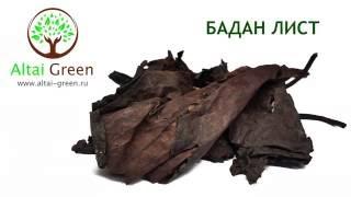 Бадан лист - чем полезен лист бадана