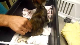 Ерошенко 16,котёнок-перебит хребет (( беги радуге...