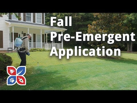 Do My Own Lawn Care Episode 27 Fall Pre Emergent Video