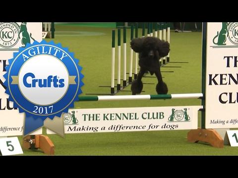 Agility - Crufts Team Medium Final (Part 2) | Crufts 2017