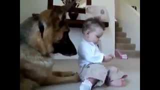 смешные приколы про животных #1
