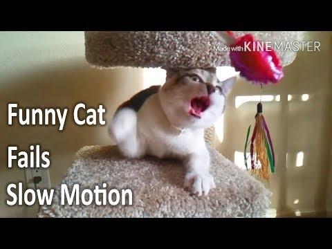 Funny Cat Fails Slow Motion