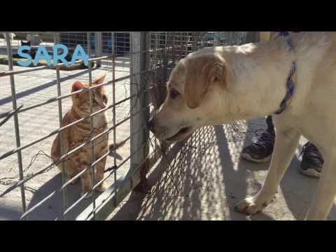 Sara con gatos | Protectora de Animales Málaga